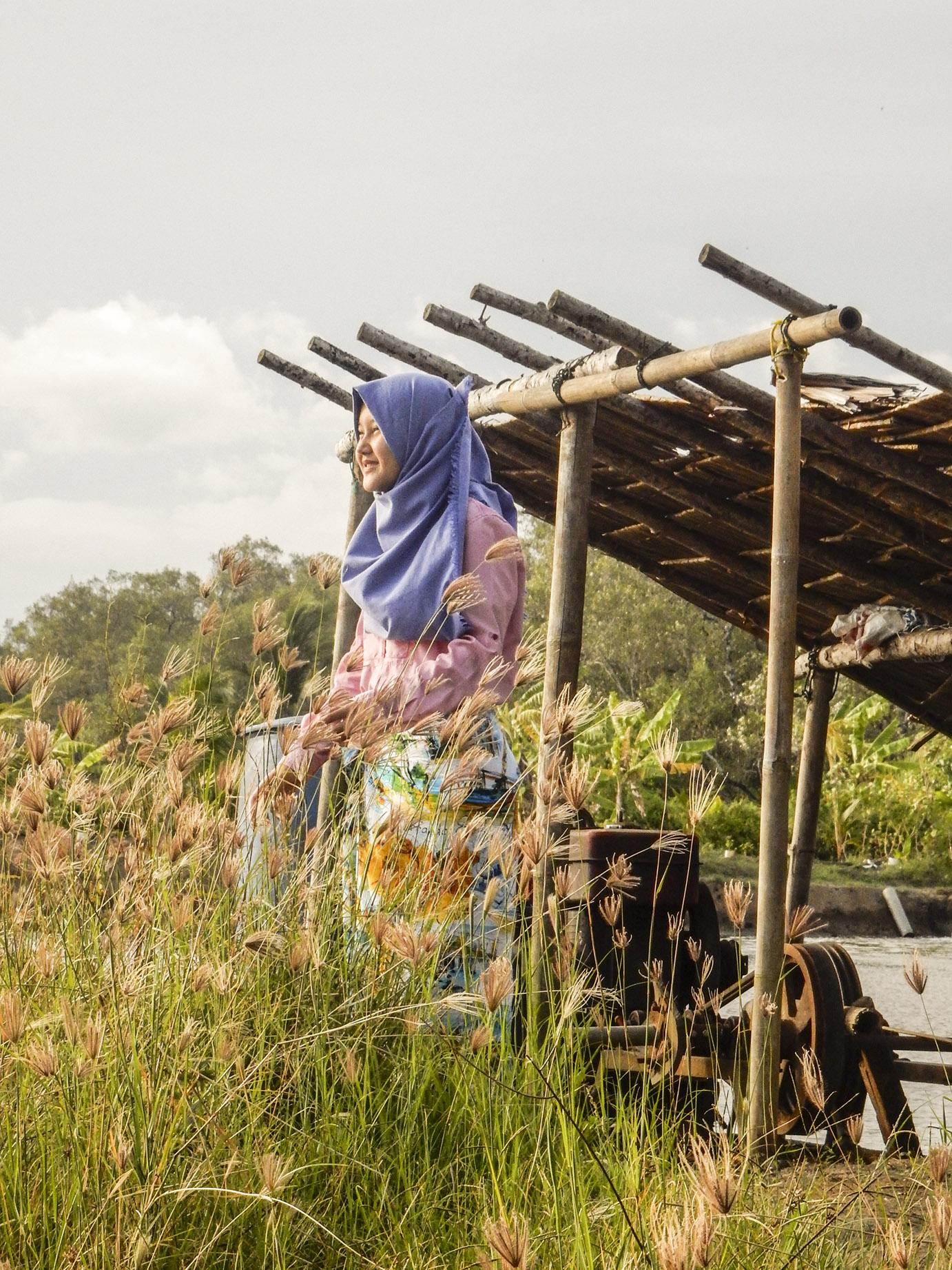 harga tiket masuk jembatan mangrove batukaras