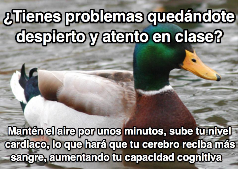 19 trucos del pato más sabio de internet.
