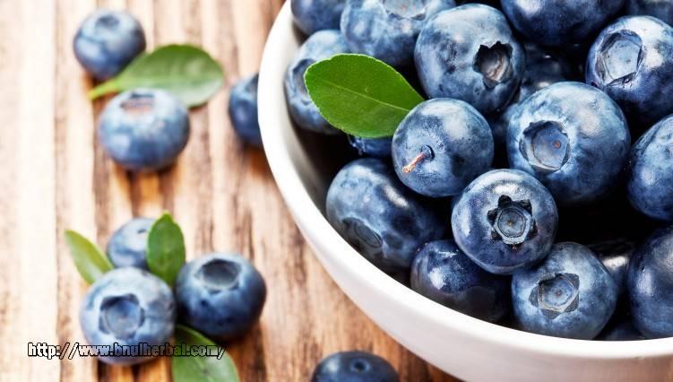 Manfaat Buah Blueberry Mampu Menetralisir Kolesterol Jahat