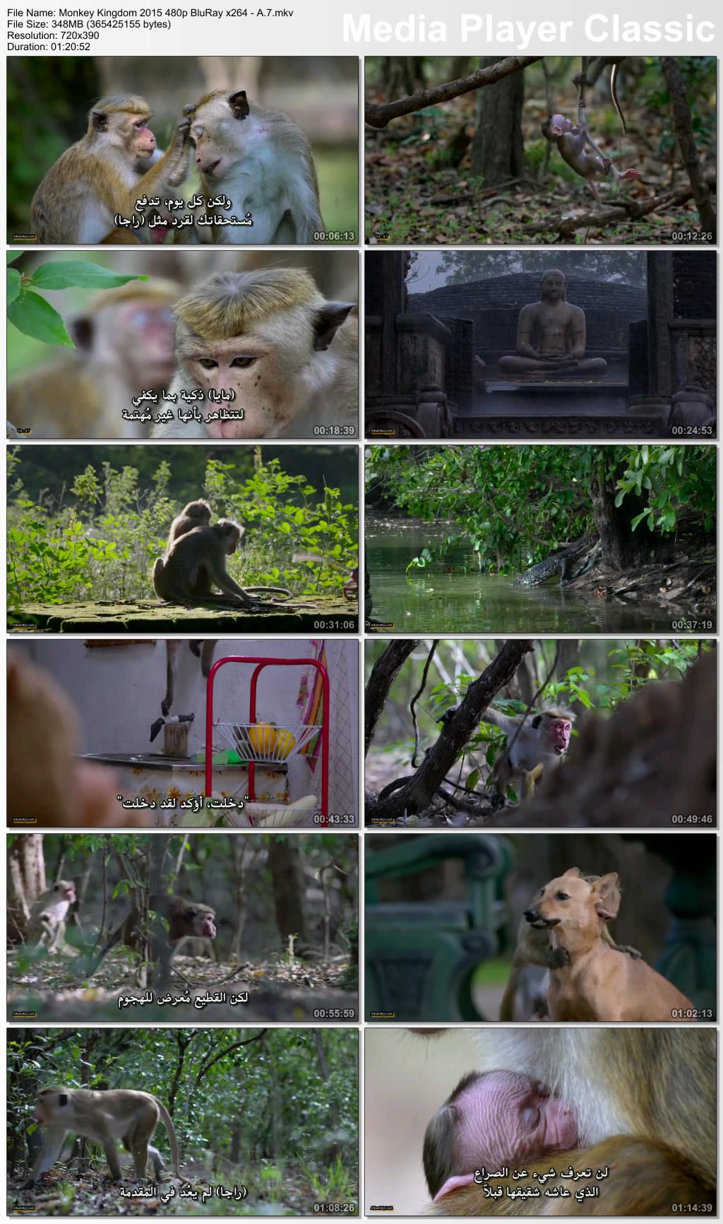 فيلم Monkey Kingdom 2015 مترجم