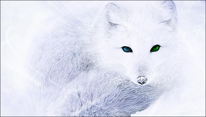 Arctif Fox ©Yros