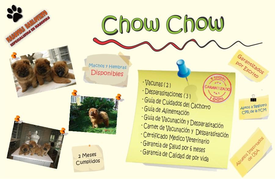 Mascotas_Barlovento