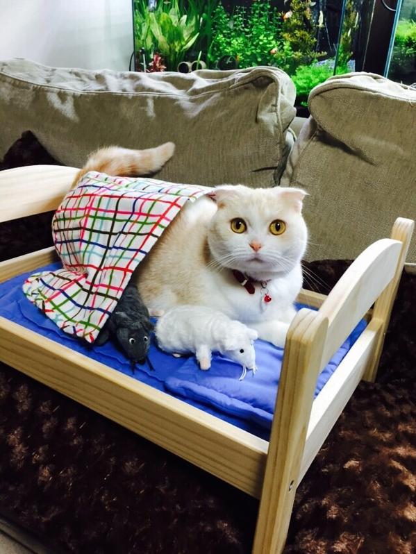 Due os de gatos japonenes convierten camas de mu ecas en - Cama munecas ikea ...