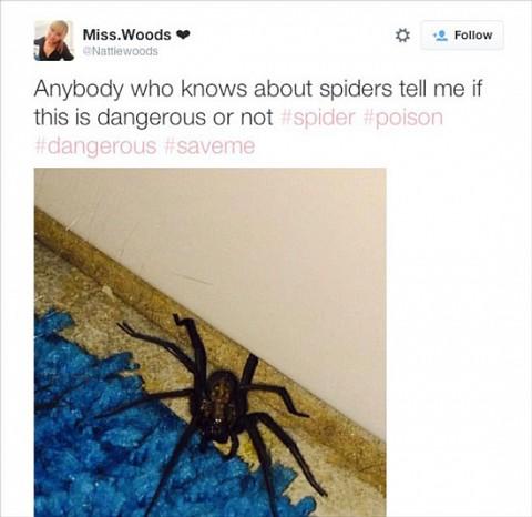Cuando una mujer es acechada... por una araña