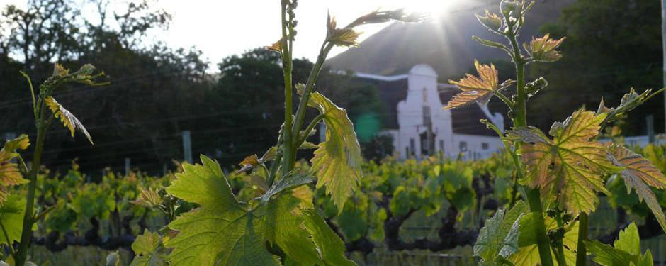 Groot Constantia - Wine Tasting, Cape Town