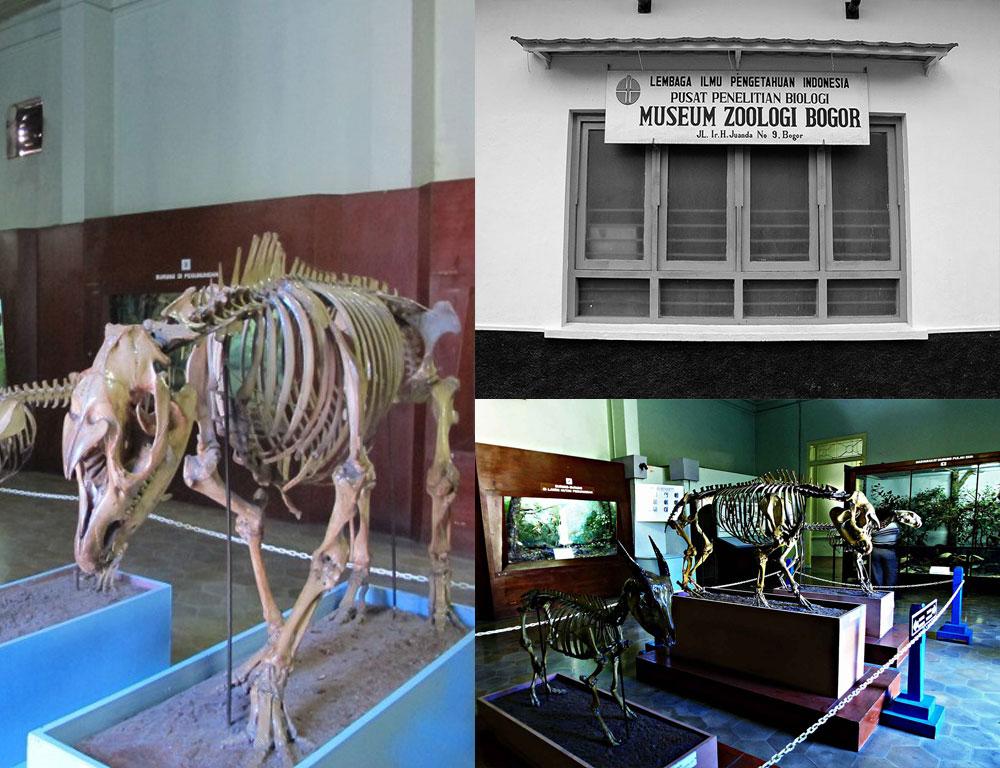 Wisata Bogor: Ada Koleksi Apa Saja di Museum Zoologi?