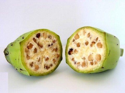 Antes y ahora de cosas modificadas geneticamente