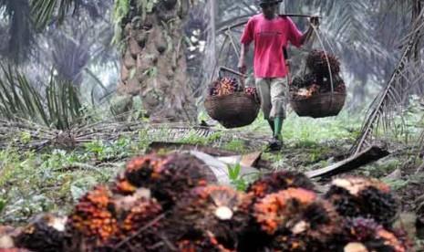 Jokowi Akan Teken Aturan Wajib Celengan untuk Industri Sawit