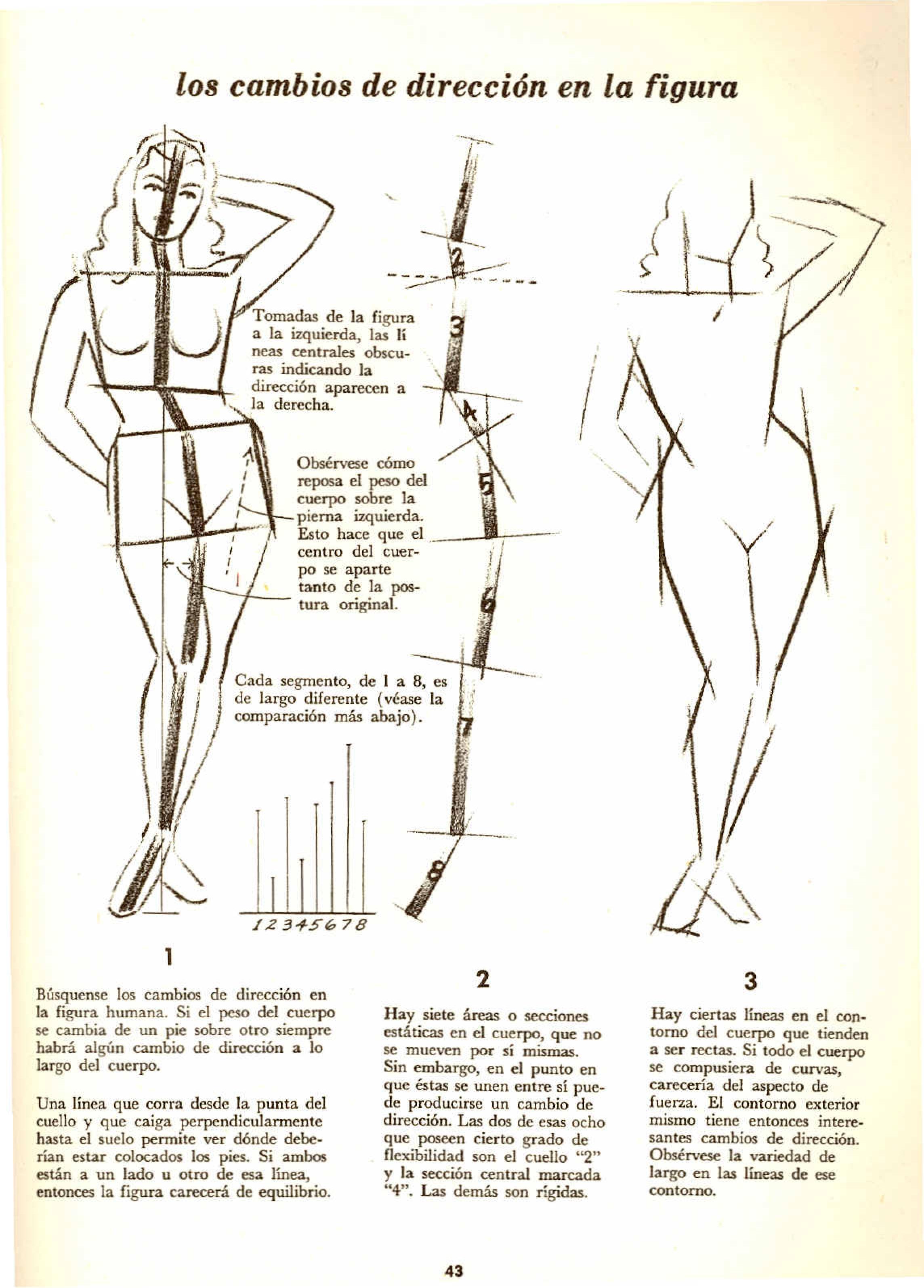 Magnífico Anatomía De Cambio Embellecimiento - Imágenes de Anatomía ...