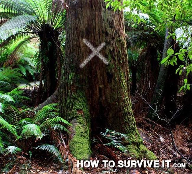 25 Trucos de Supervivencia que te pueden salvar la vida 35mcrqbA