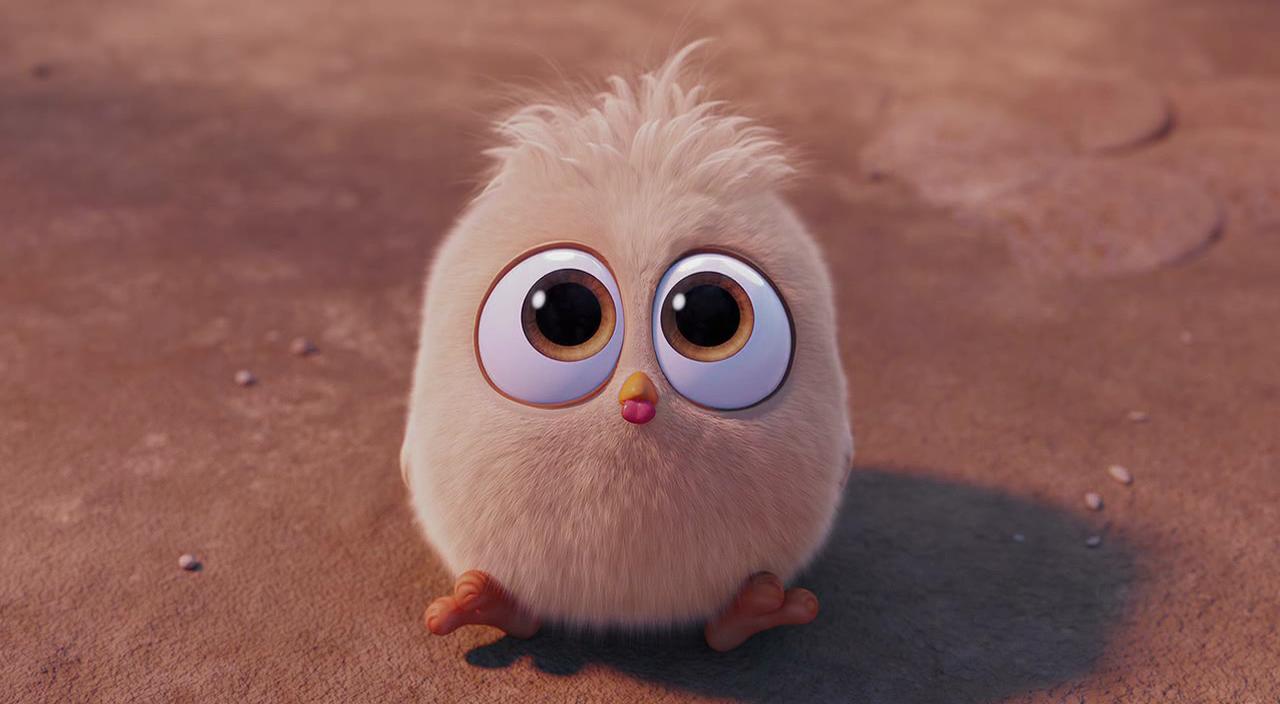 Oglądaj: Angry Birds Film / Angry Birds (2016) z dubbingiem na CDA w HD za darmo!
