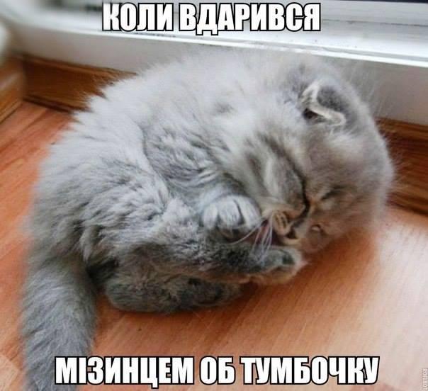 fYEb9ia5.jpg